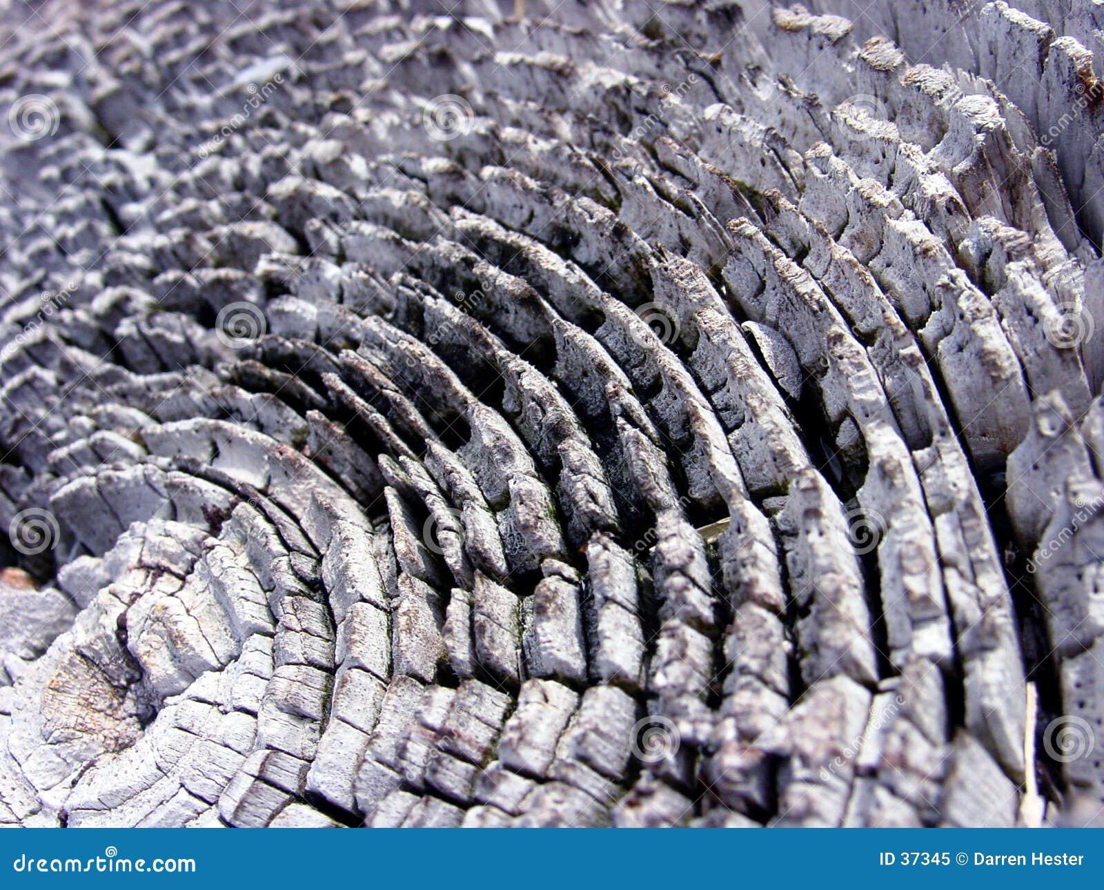 Download Textura de madera imagen de archivo. Imagen de madera, fondo - 37345