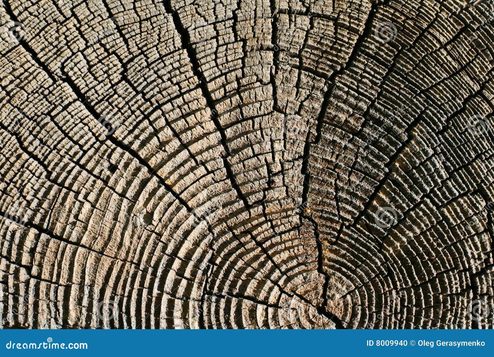 Textura de madera del pino foto de archivo imagen 8009940 - Maderas del pino ...