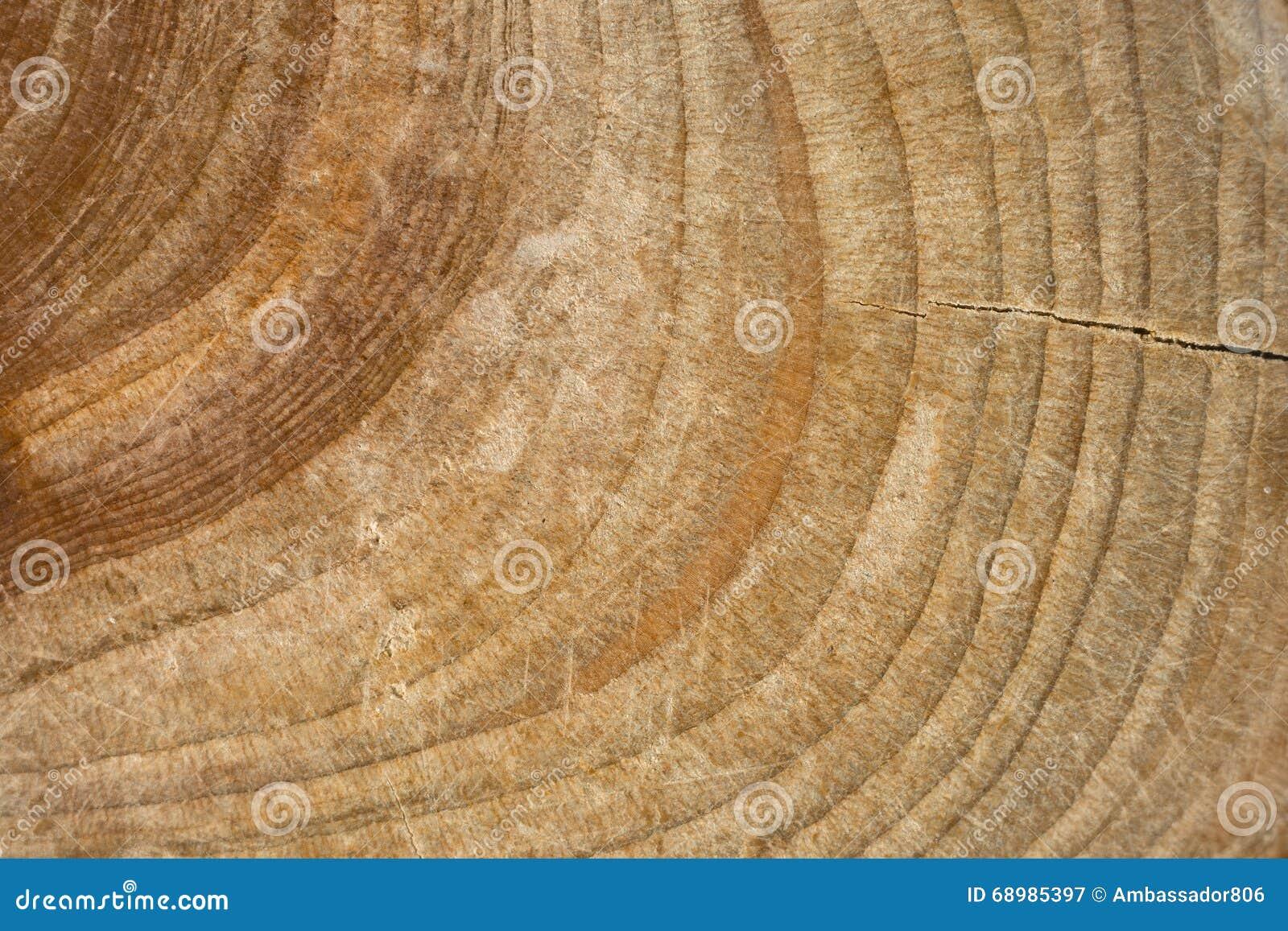Textura de madera del tocón, tronco de árbol cutted