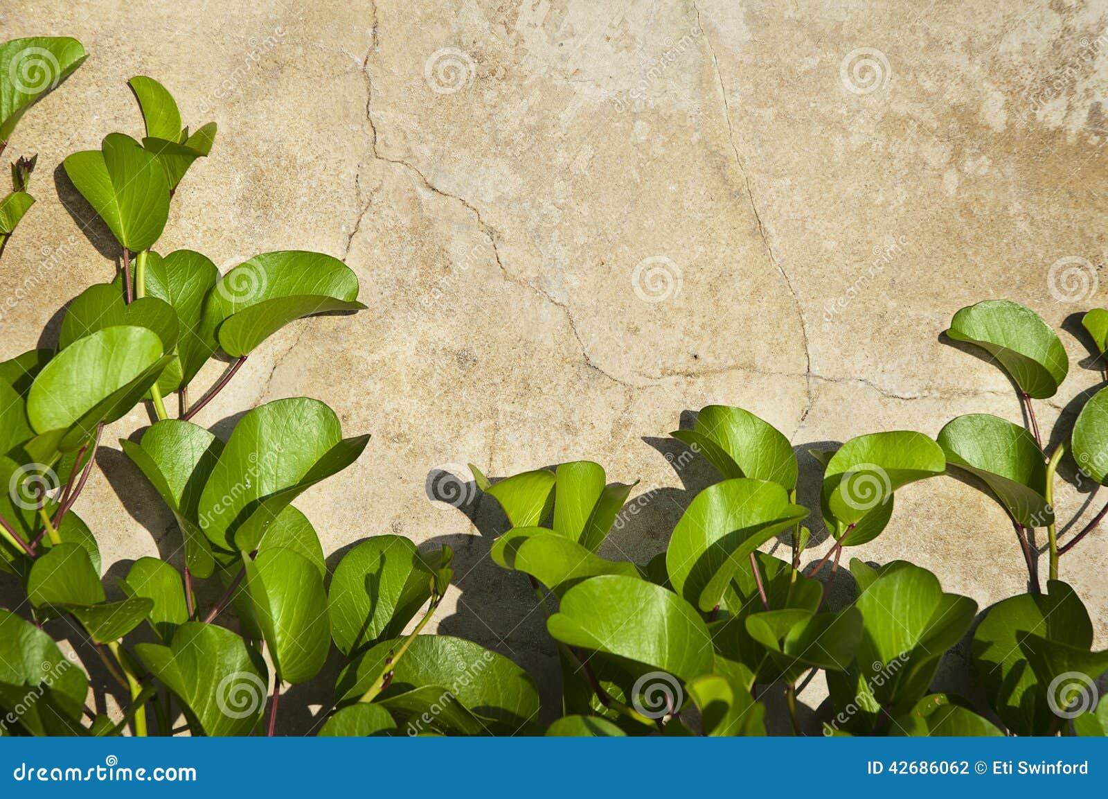 Textura de pedra com folhas verdes