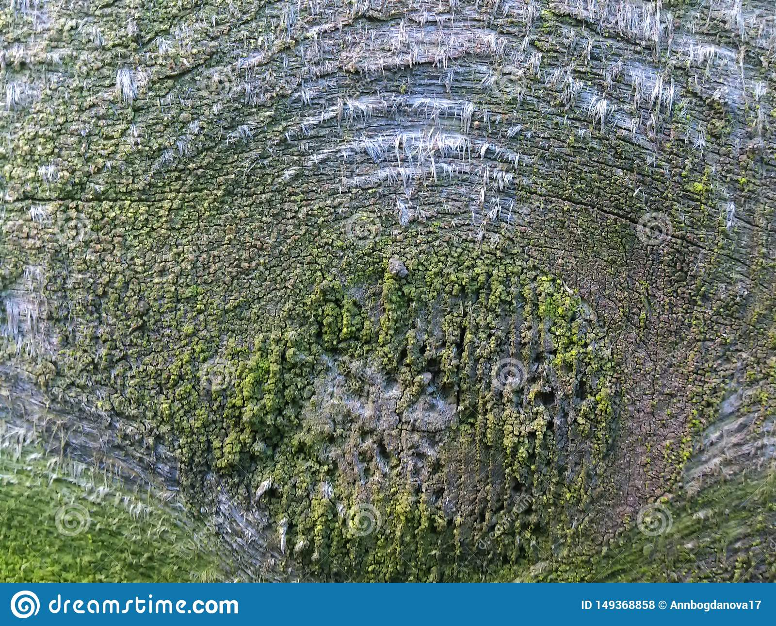 Textura de um corte da ?rvore com musgo