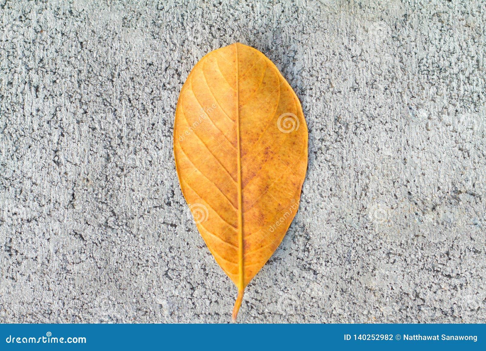 Textura del piso del cemento del fondo