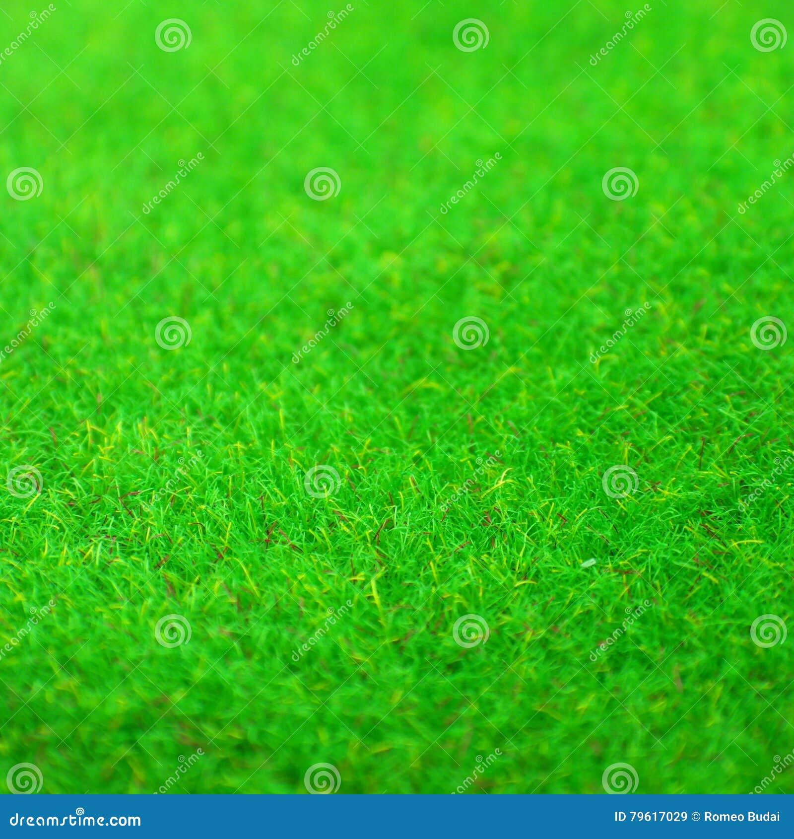Textura do fundo da grama verde