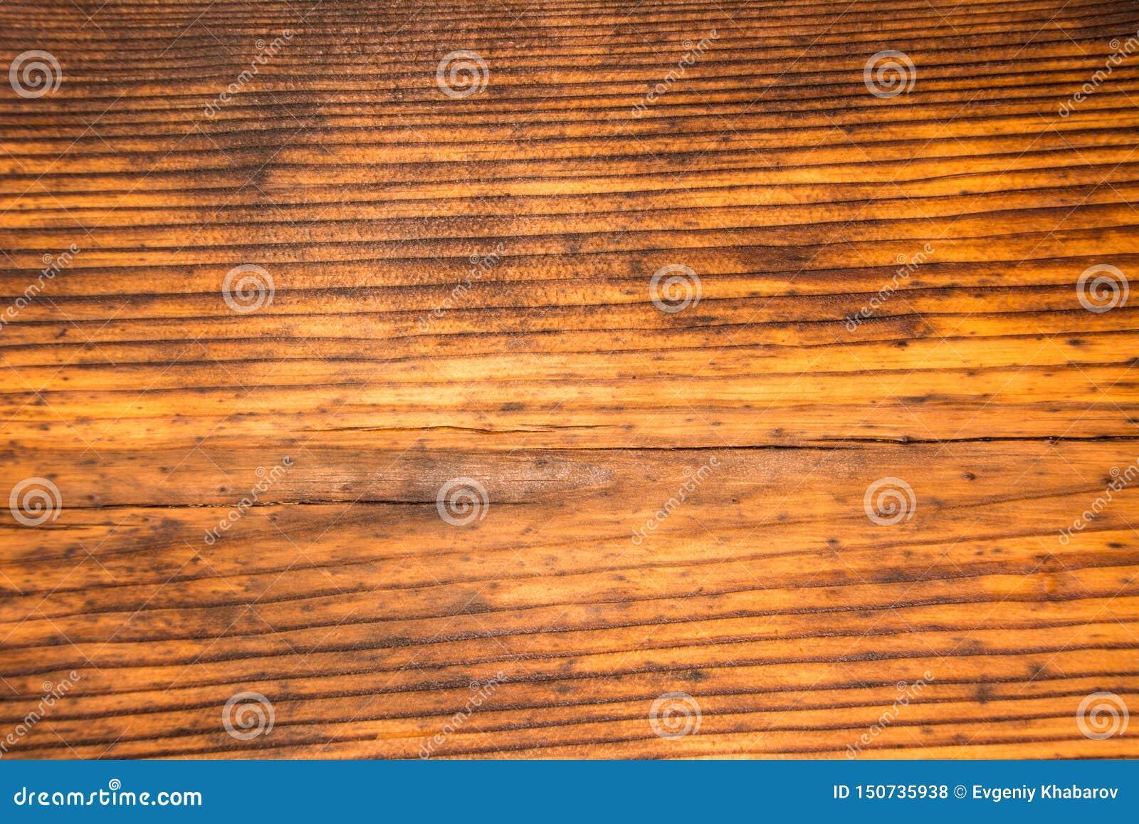 A textura do pinho velho Textura de madeira