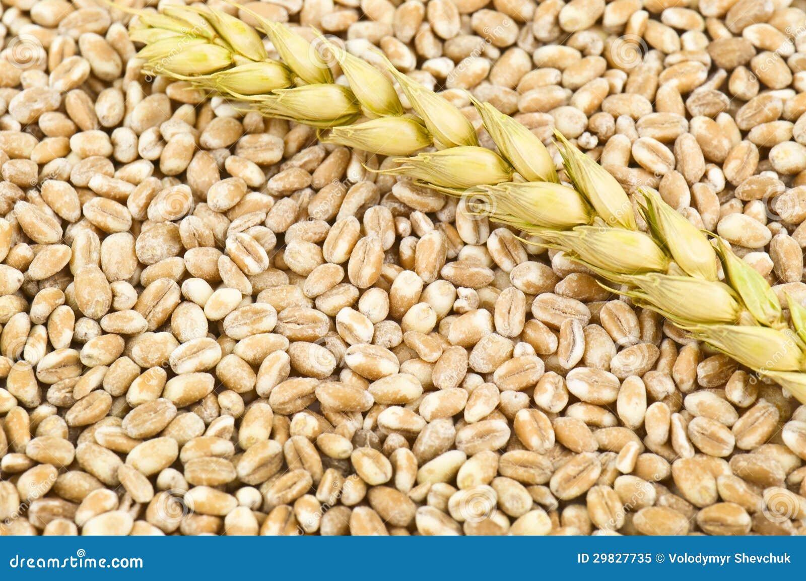 Textura do trigo