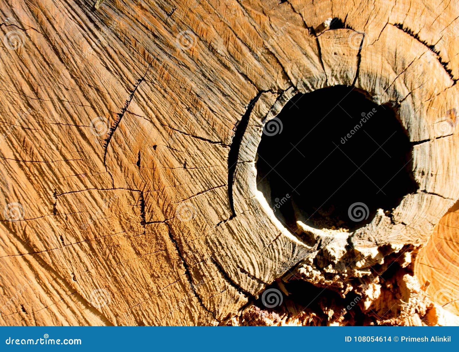 Textura dos anéis de árvore do eucalipto o seção transversal