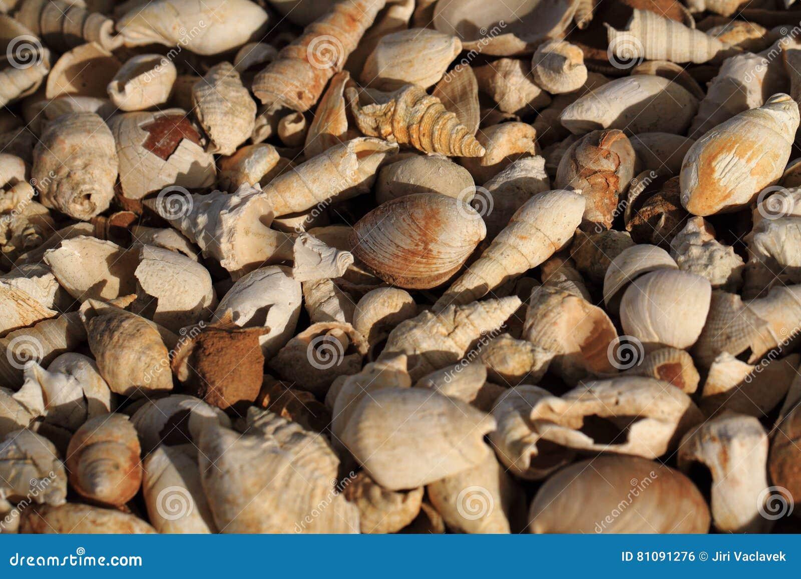 Textura dos fosils de Shell