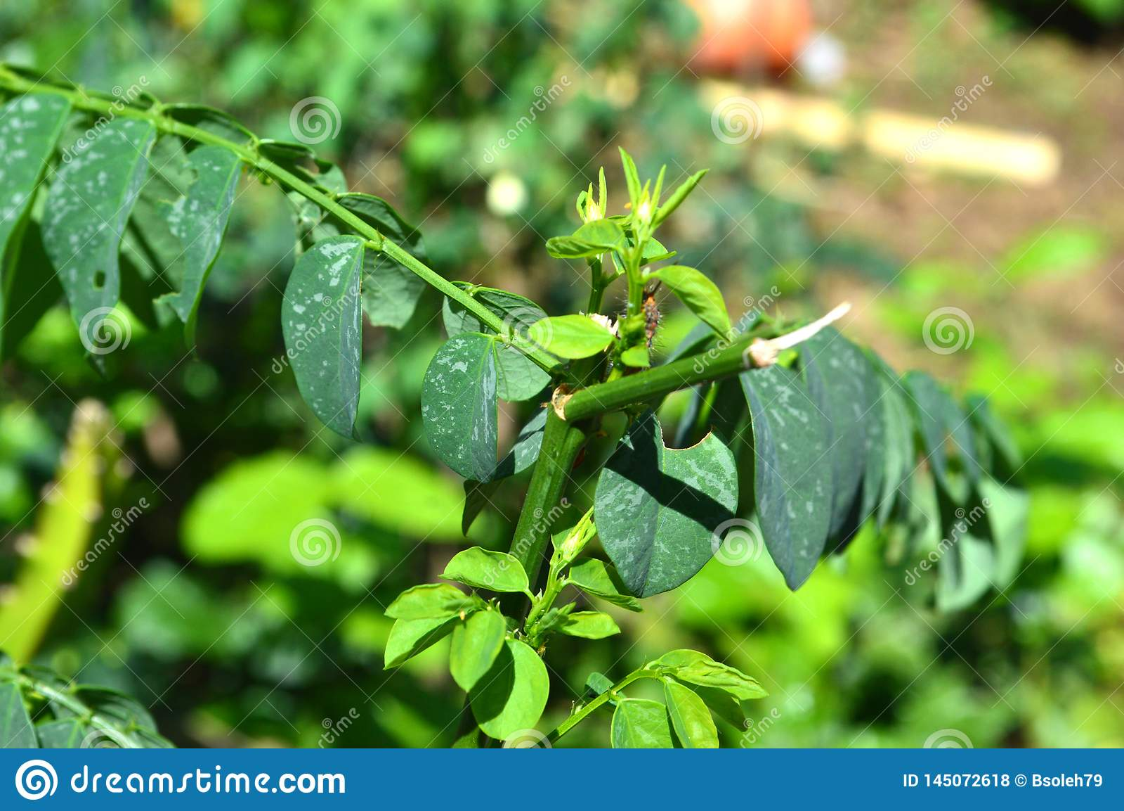 Textura e fotos das folhas verdes em um clima tropical