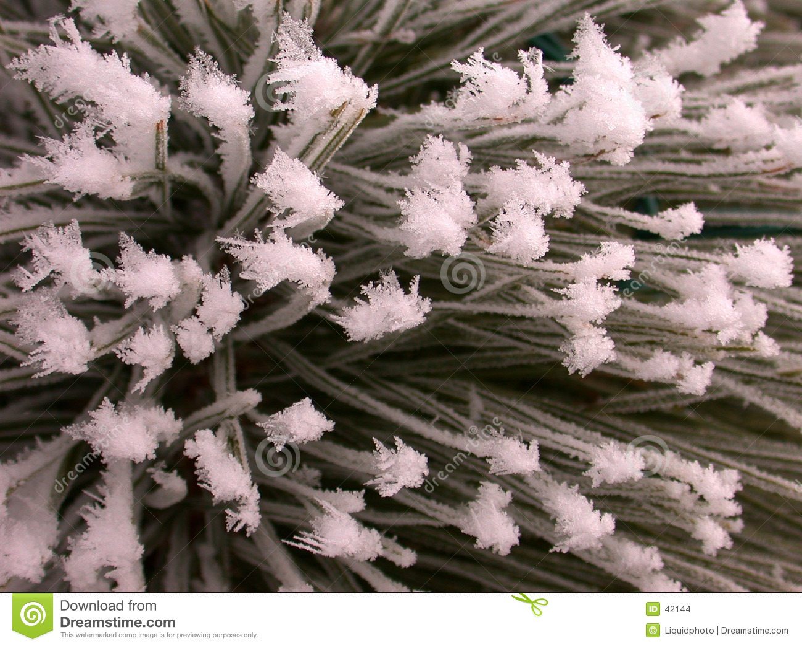 Textura escarchada del pino