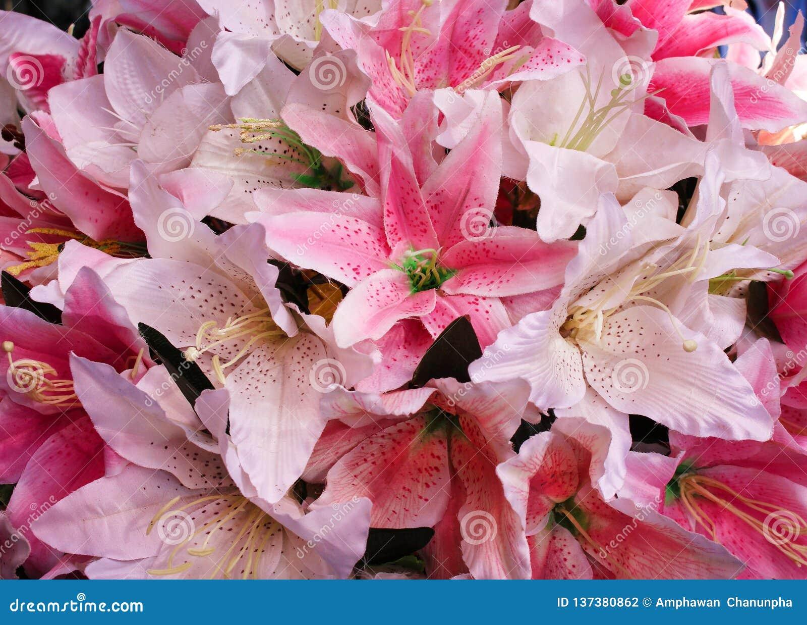 Textura floreciente colorida del modelo del rosa y blanco lilly de la tela de las flores del grupo para el fondo