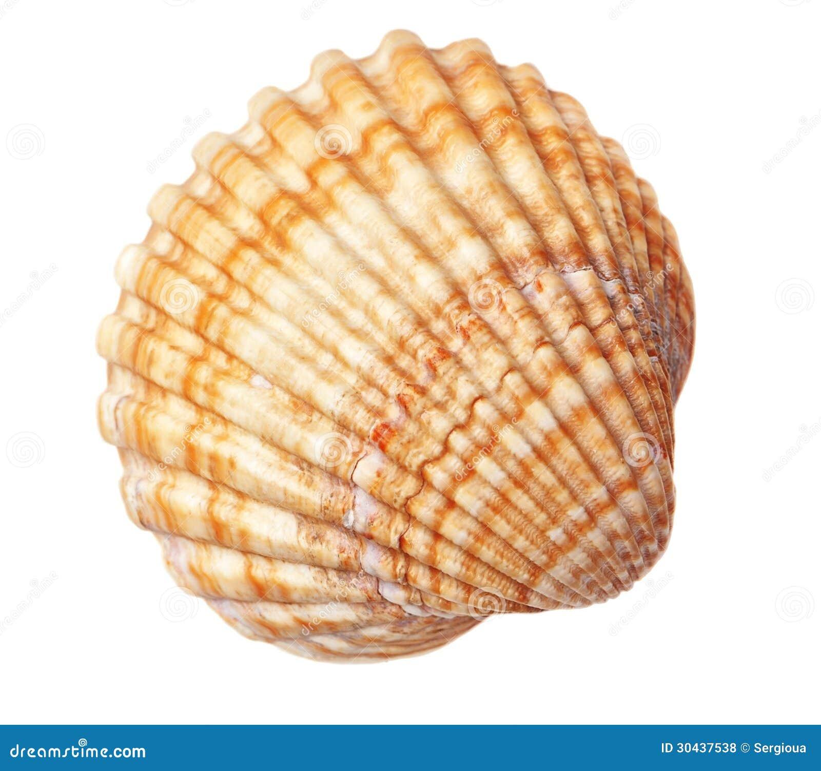 Textura Hermosa De La Concha Del Mar Foto De Archivo Imagen De - Fotos-de-conchas-de-mar
