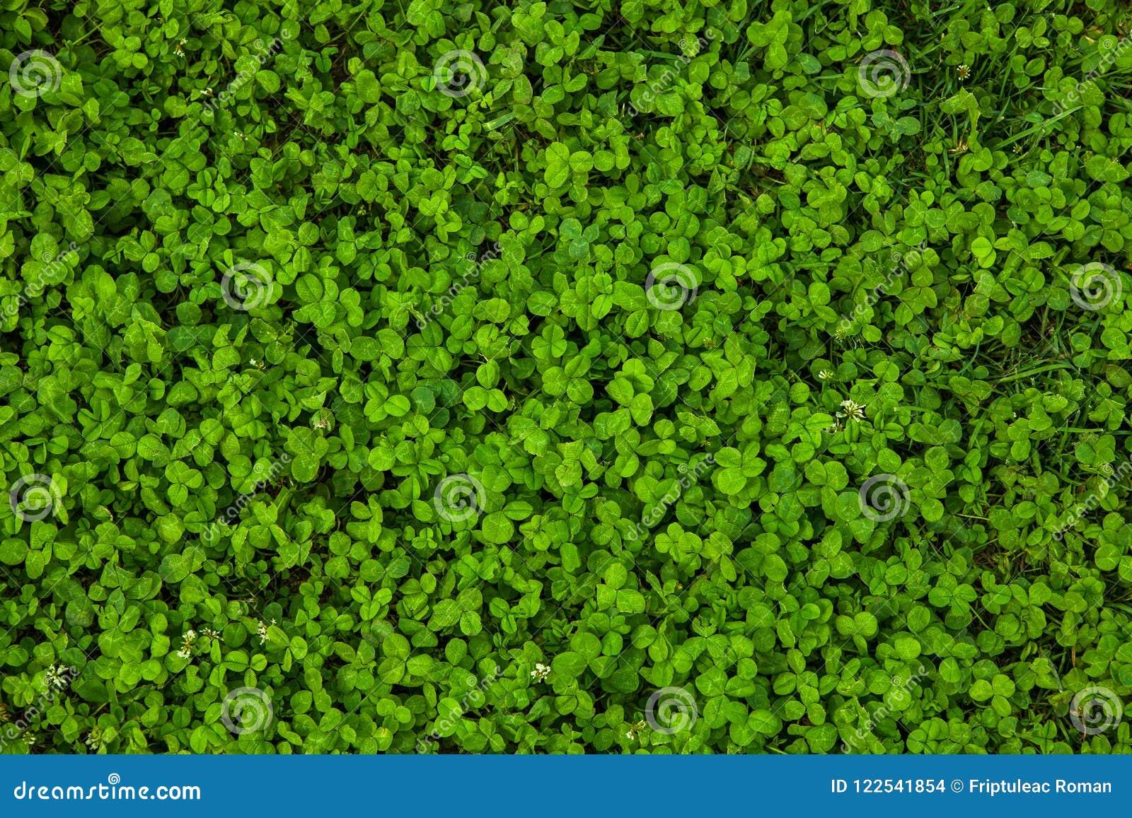 Textura hermosa de la hierba verde