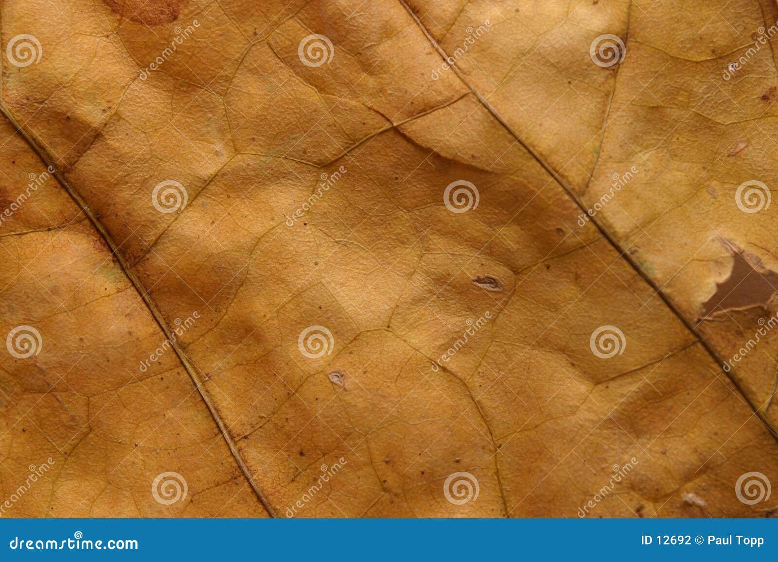 Textura inoperante da folha