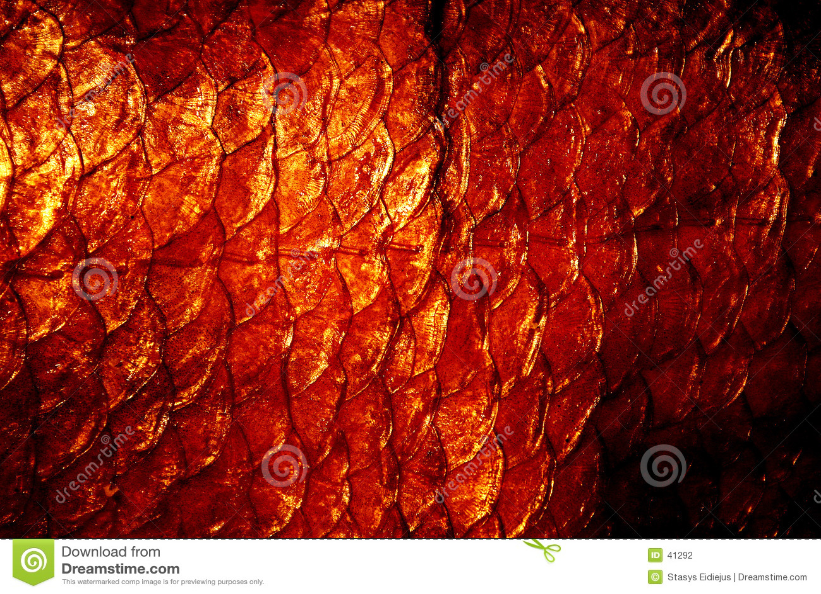 Textura natural dos exuviae