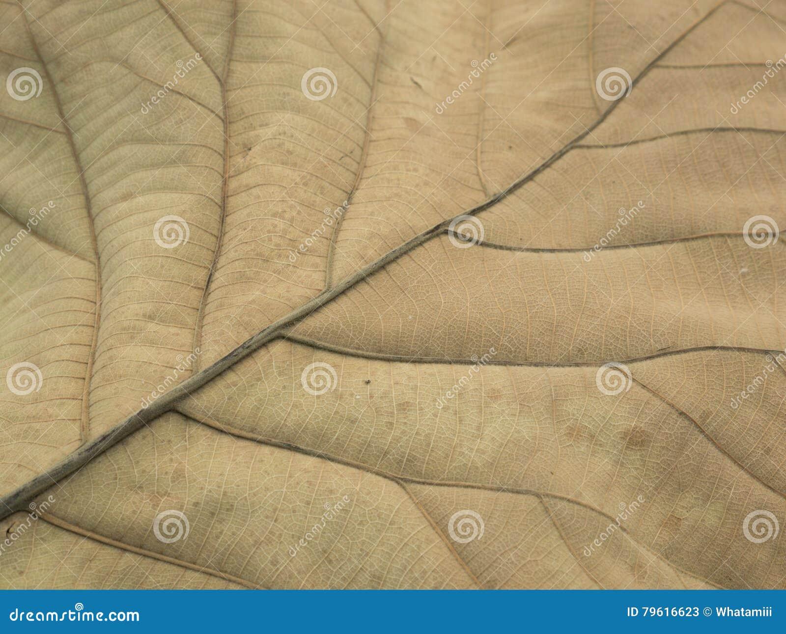 Textura seca da folha para o teste padrão Papel do fundo ou de parede