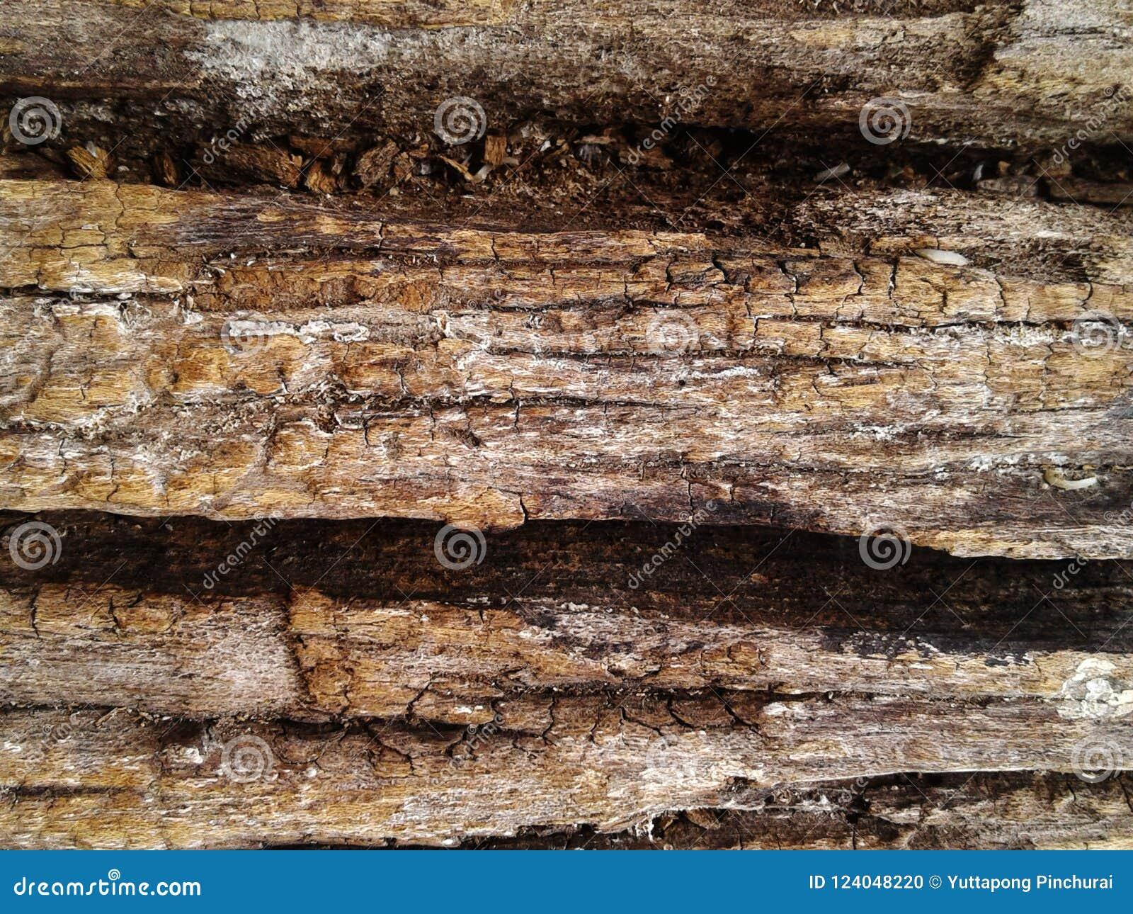 Textura superficial de madera silicified áspera Fondo de la foto