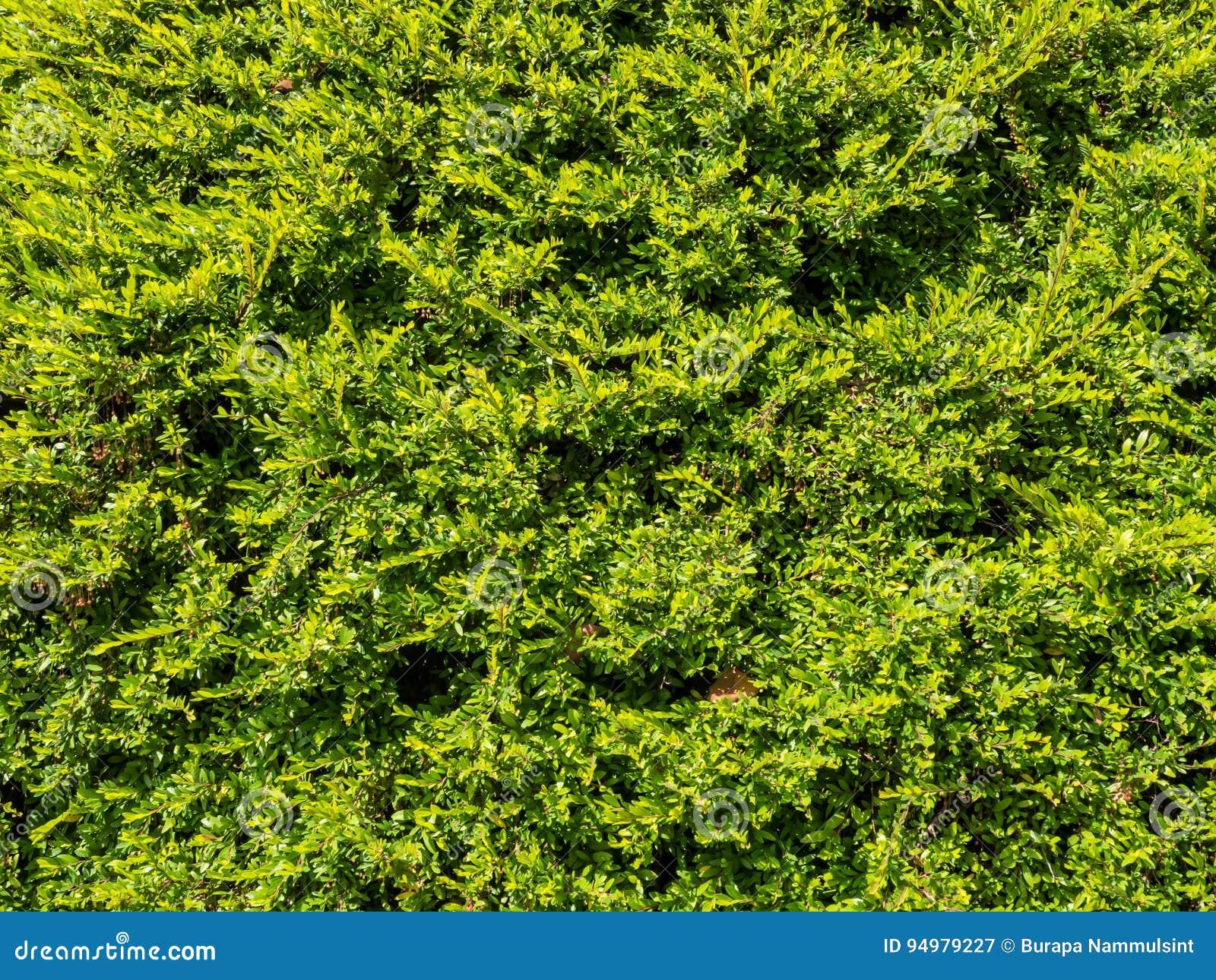 Textura verde da folha