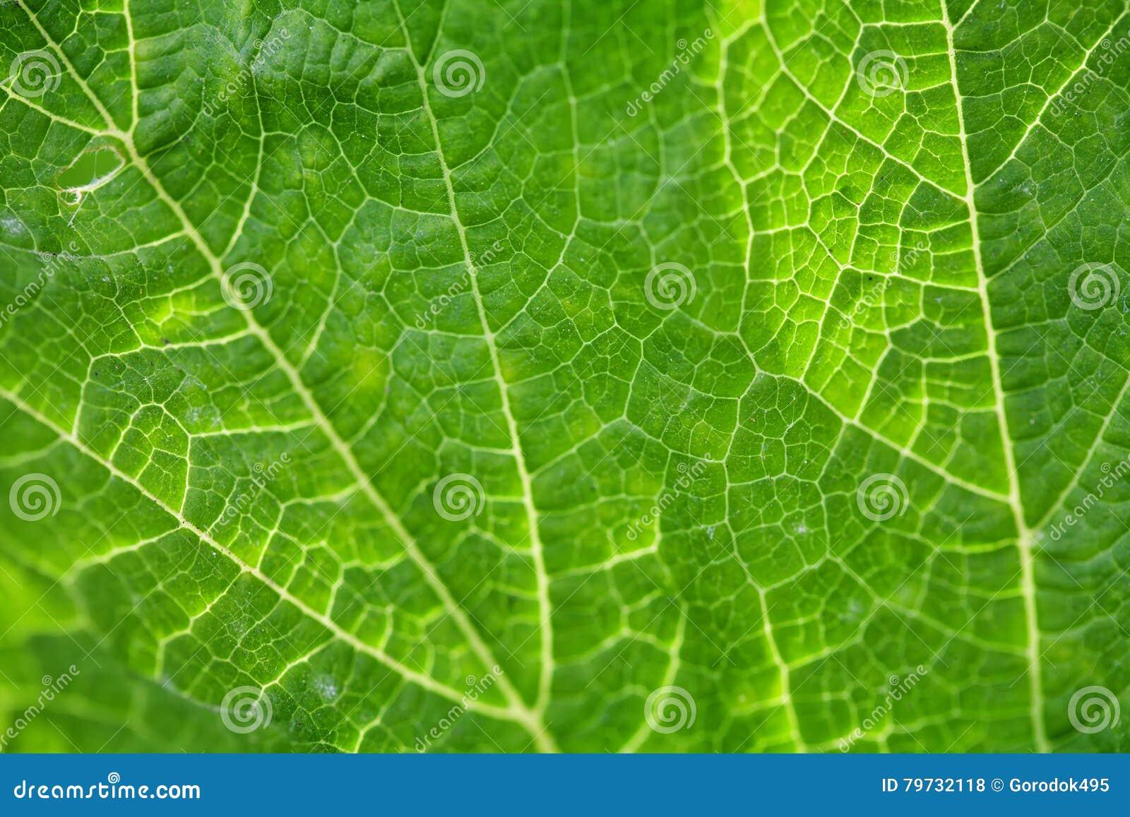 Textura verde de la hoja Visión macra Foco suave