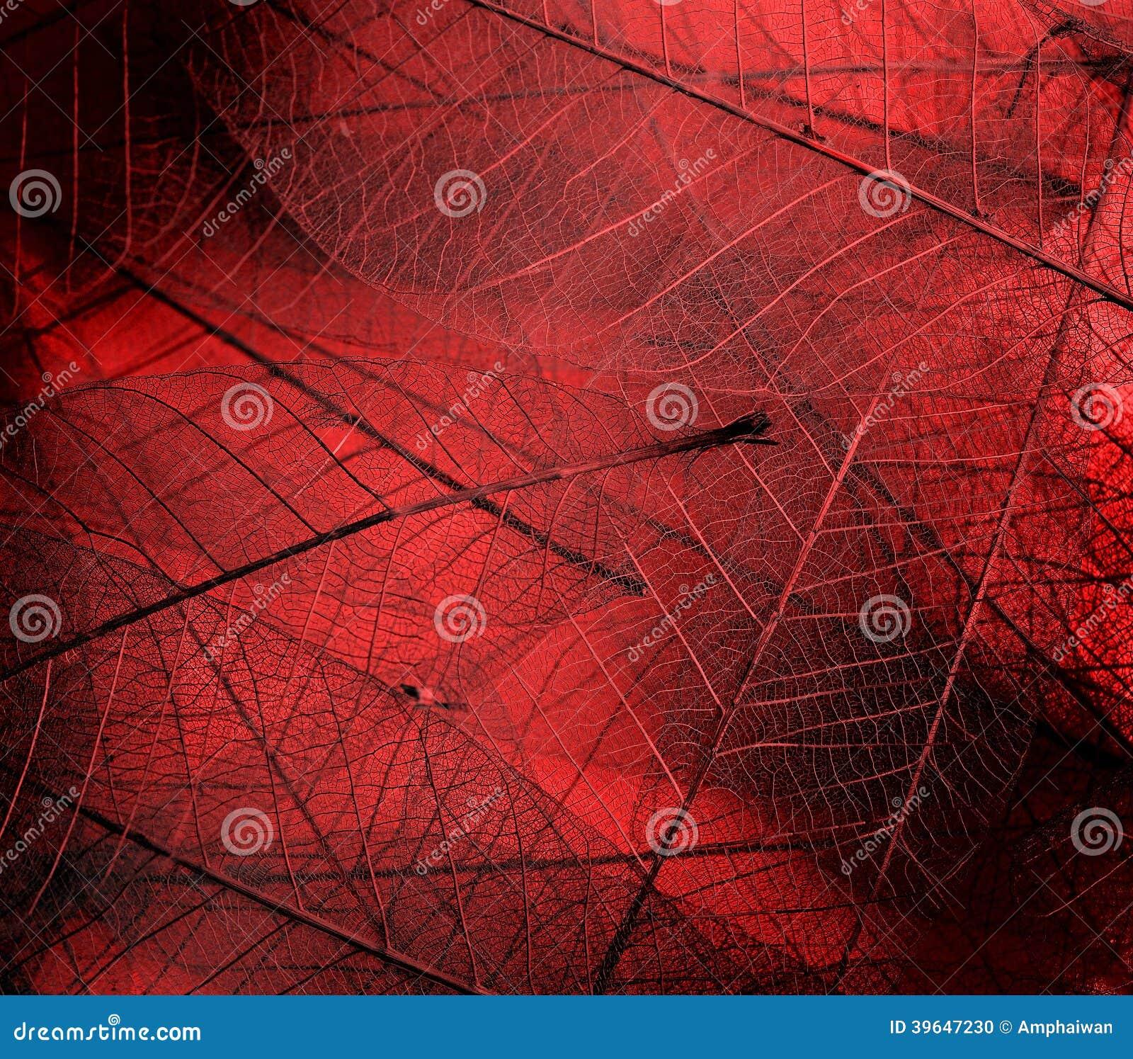 Texturas da folha