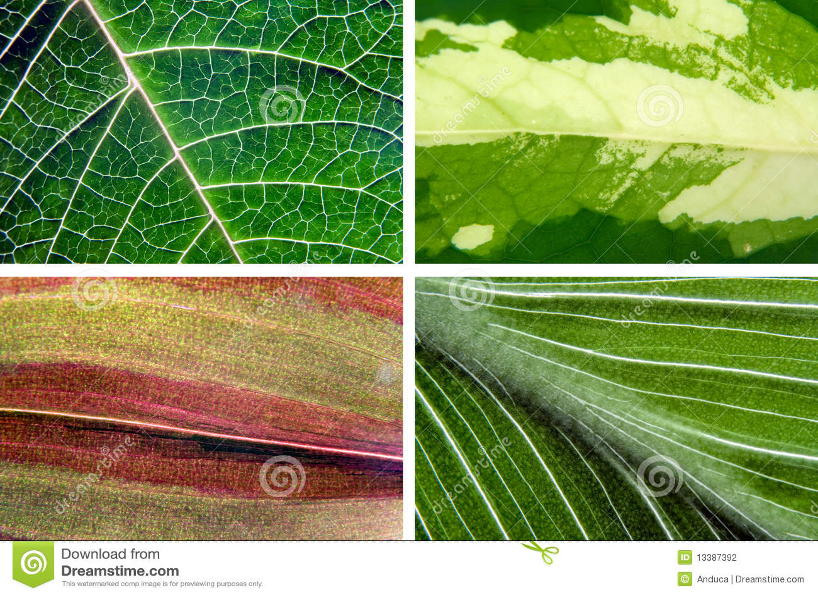 Texturas das folhas