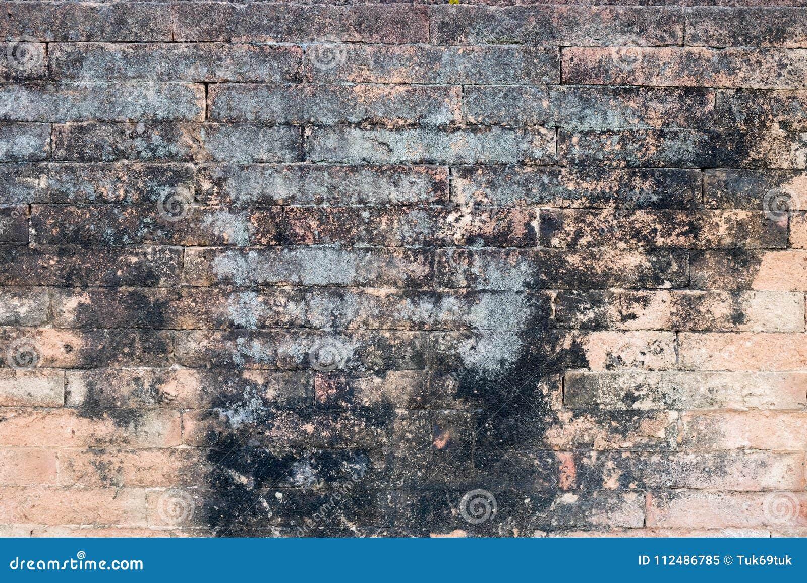 Texturas do fundo da pedra da parede de tijolo