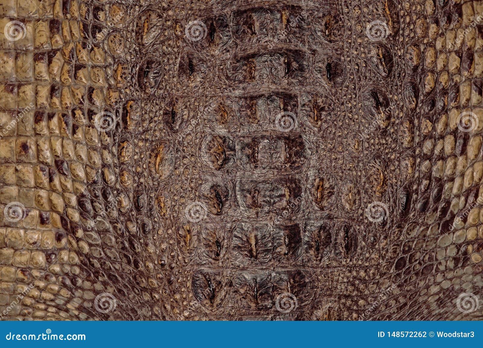 Texturas do fundo da pele do crocodilo Close-up r?pteis Amarelo acastanhado da textura de couro escamoso