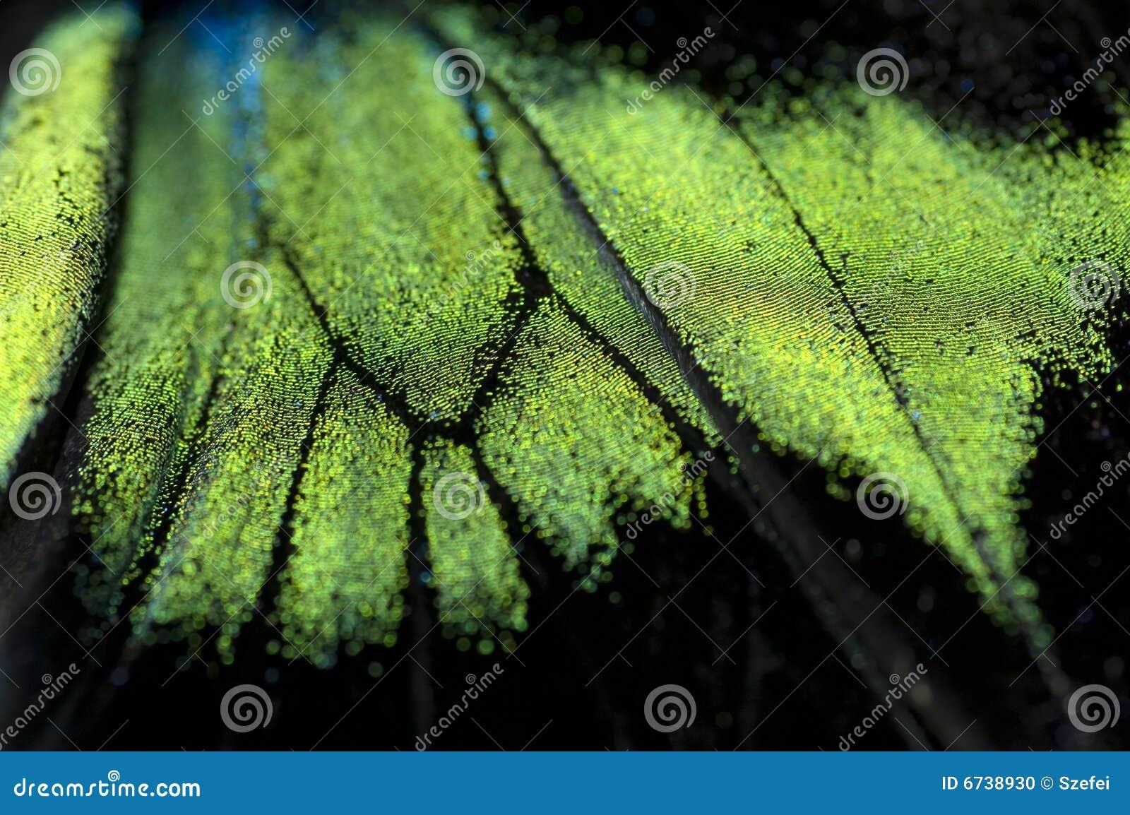 Texture abstraite d aile de guindineau