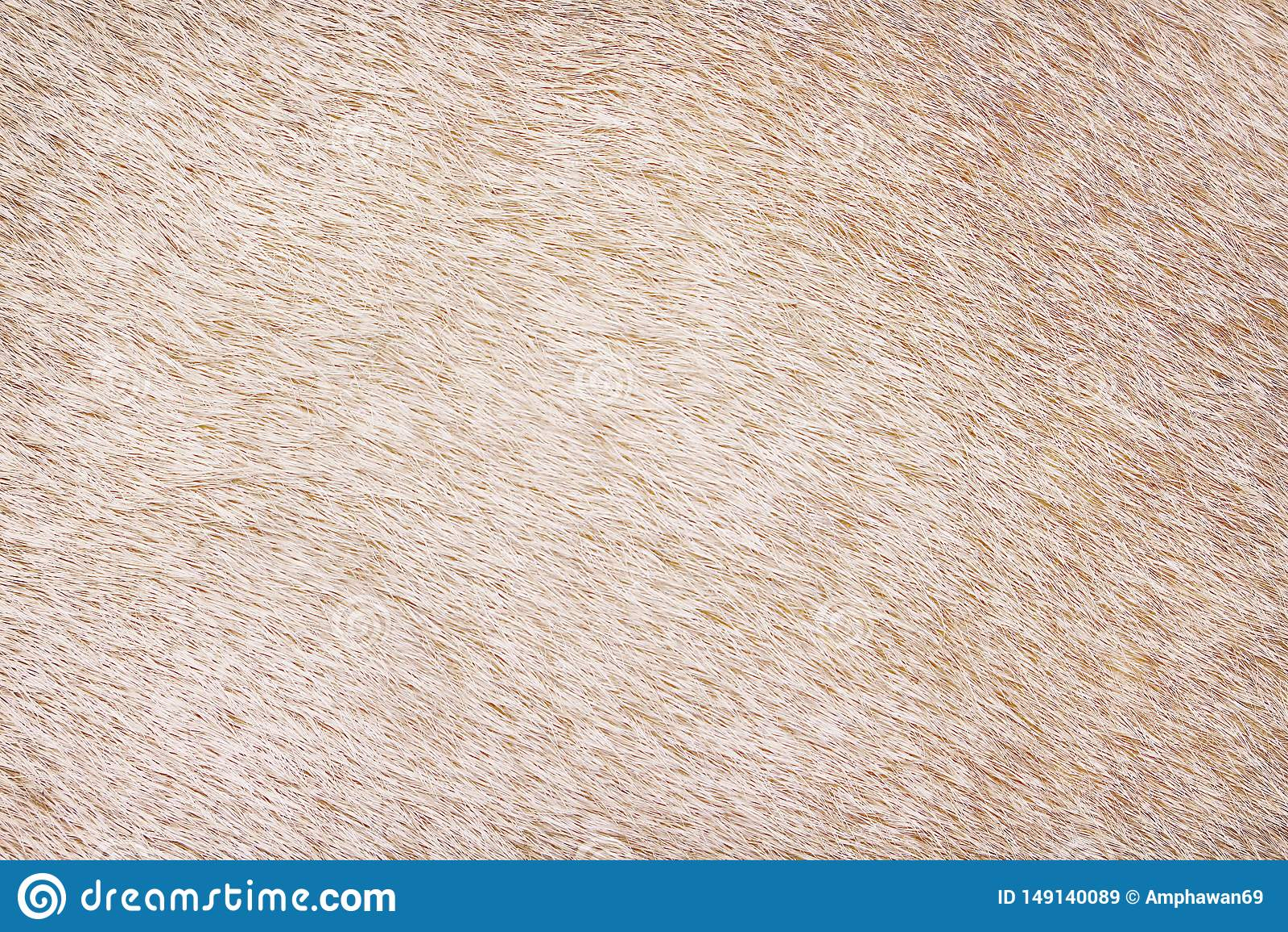 Texture abstraite de vache de mod?les brun clair de fourrure pour le fond