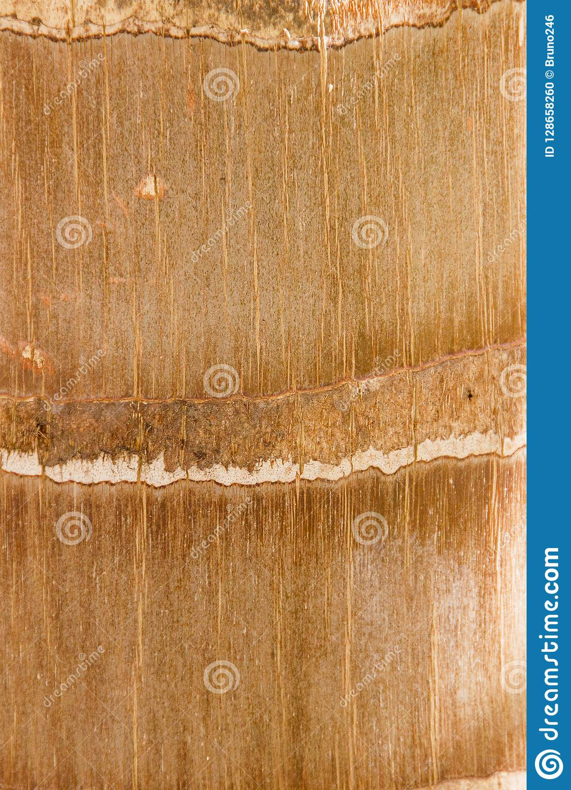 Texture background pictures