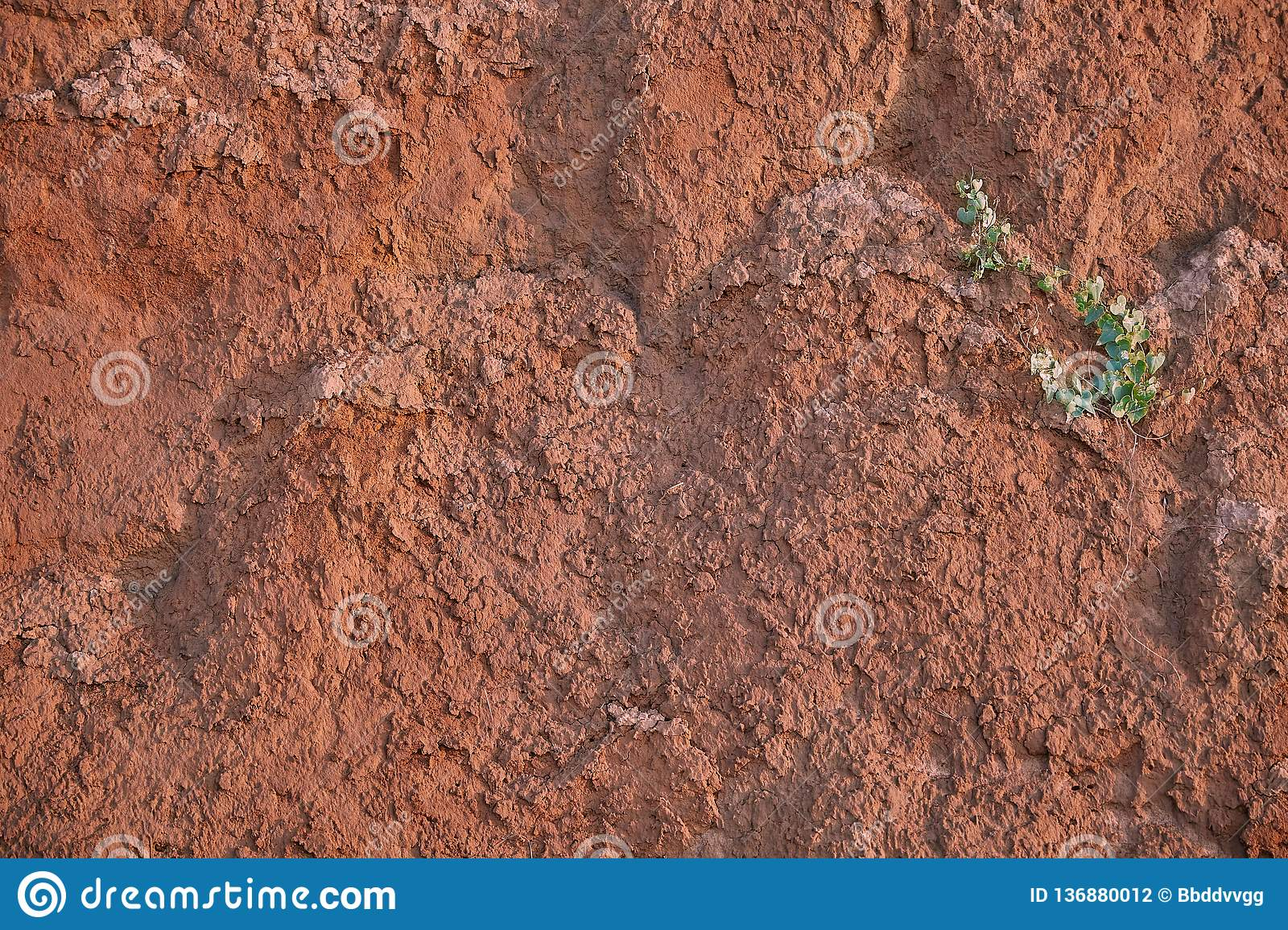 Texture of clay sand wall of red color with lots of cracks of different depth. on the wall a lonely green flower. the life and pow