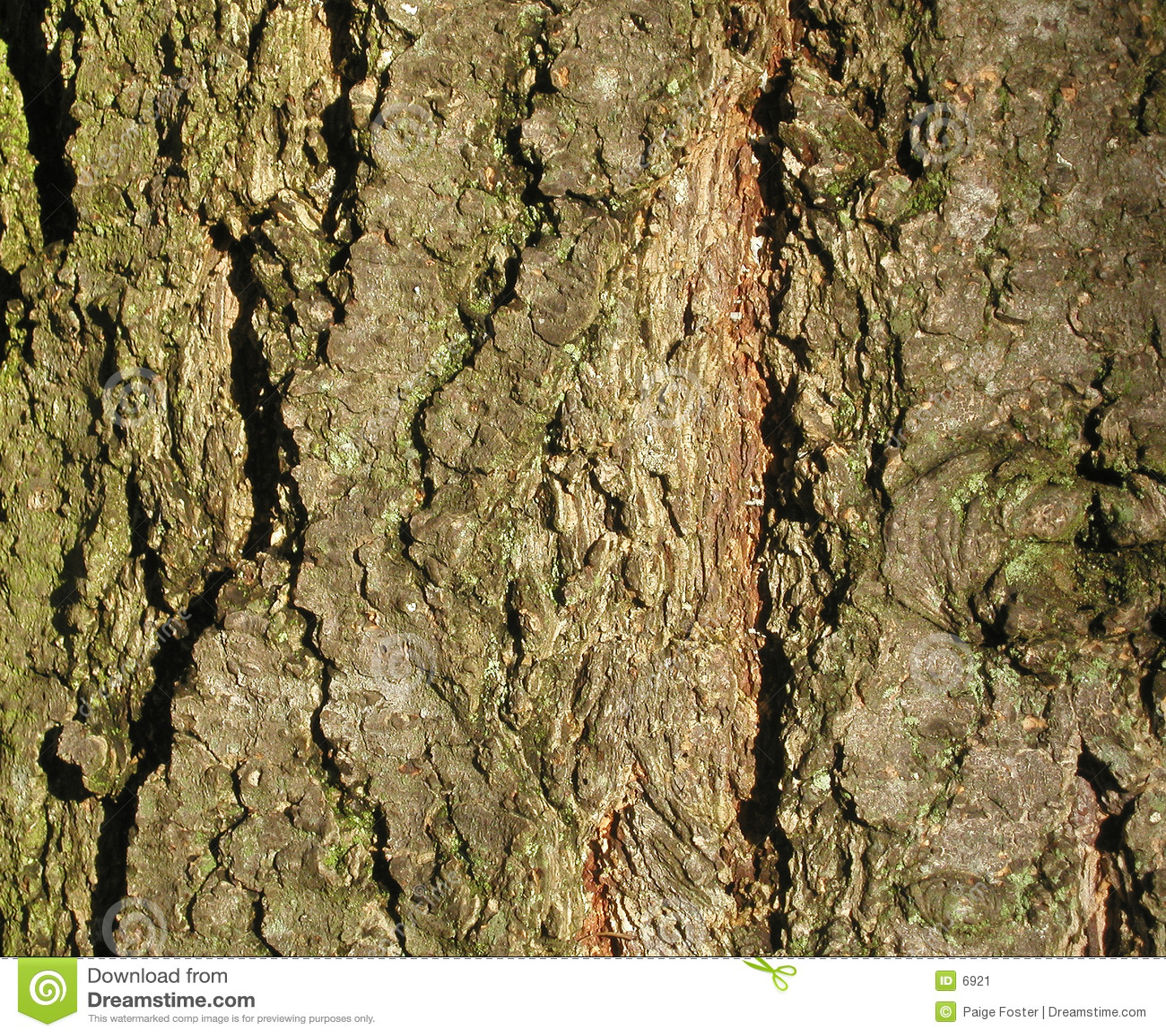 Texture d écorce d arbre