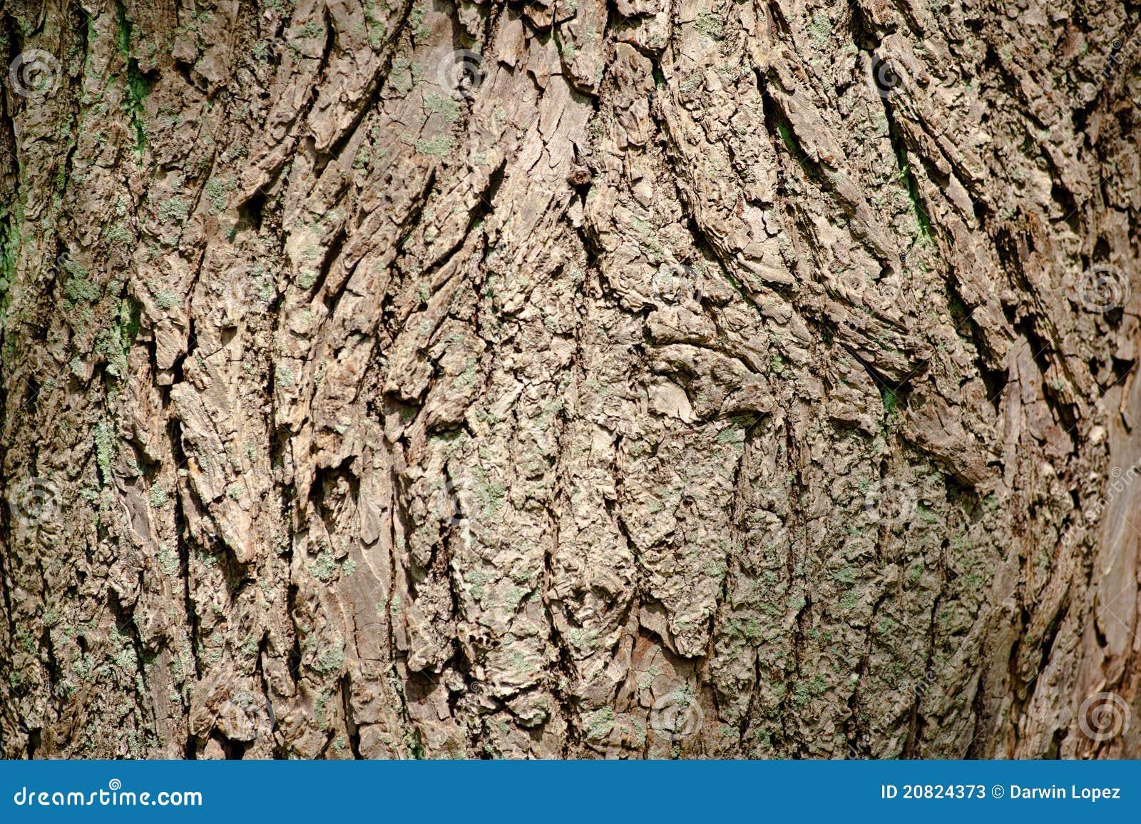 Un projectile d'un plan rapproché de texture d'écorce d'arbre