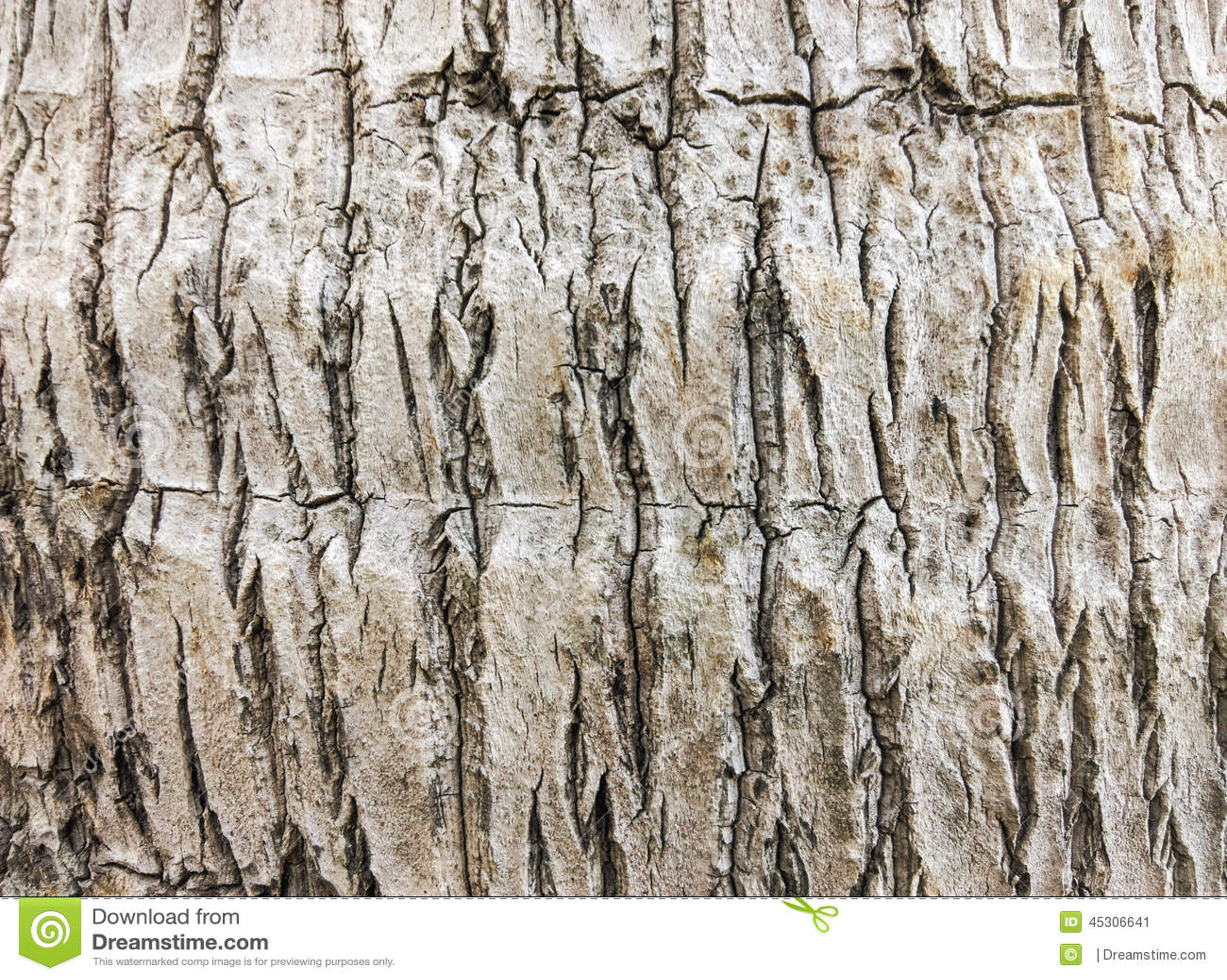 Texture d 39 arbre de plam de noix de coco image stock image du fond texture 45306641 - Arbre noix de coco ...