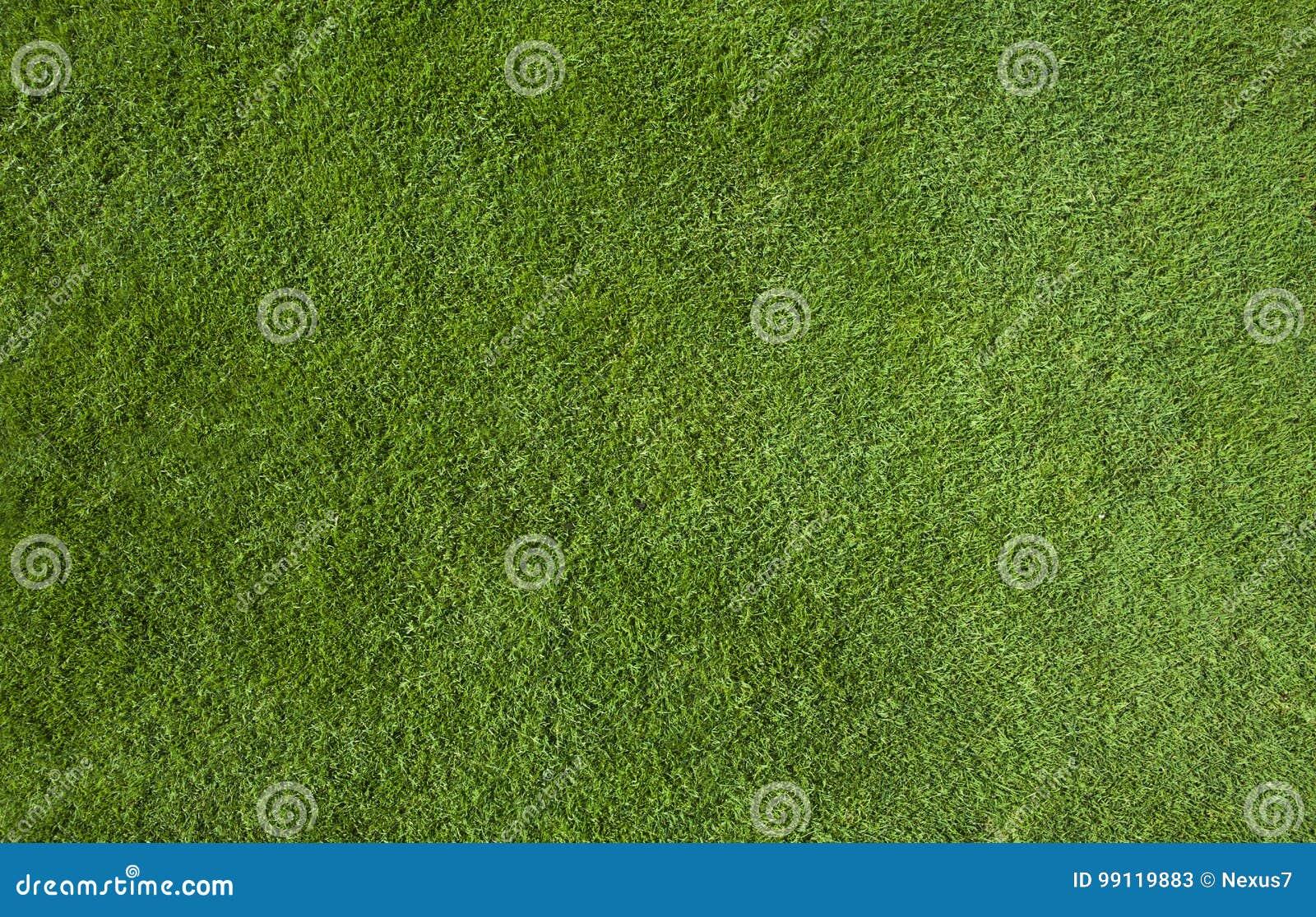 Texture d herbe verte
