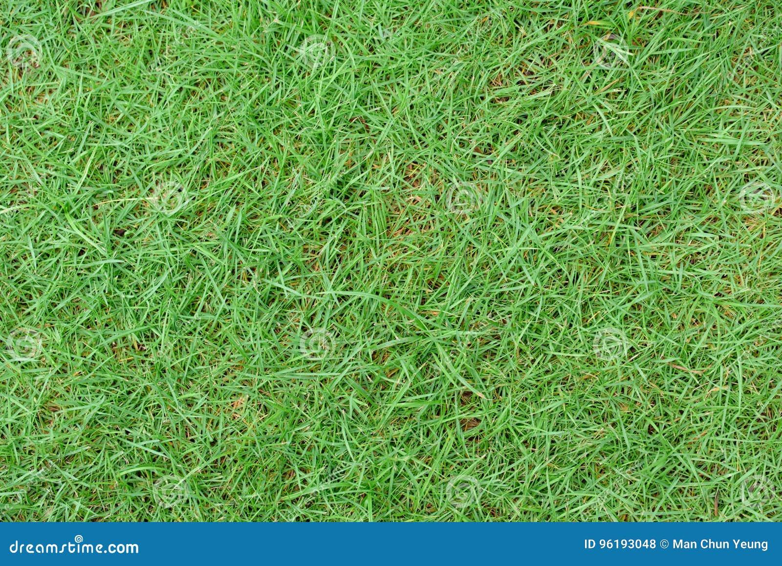 Texture d herbe verte extérieure dans la haute résolution