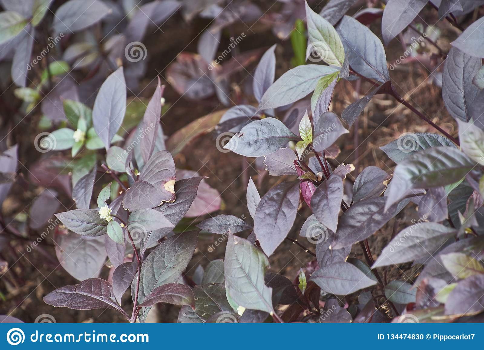 Texture of dark leaves. With a very high level of detail stock photo