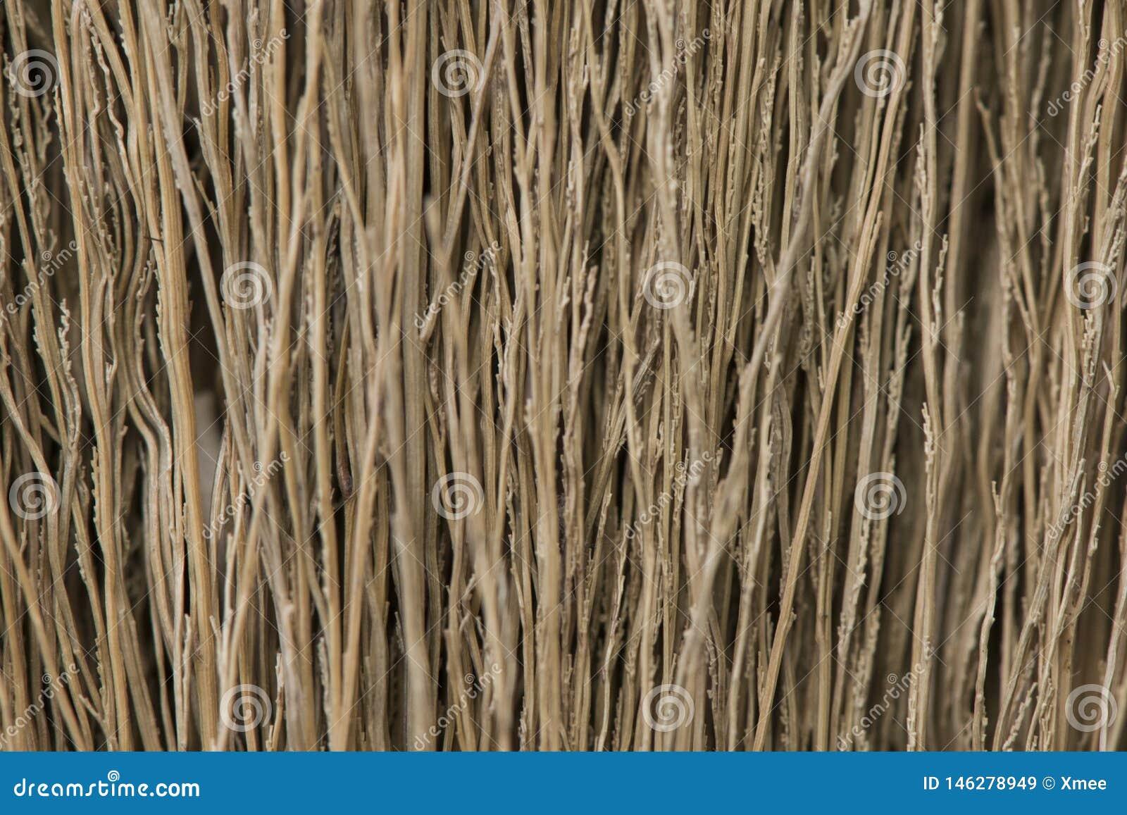 Texture de balai, texture grunge d herbe sèche