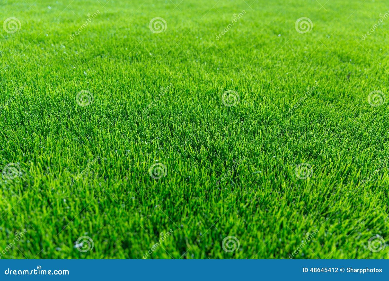 Texture de fond d herbe verte
