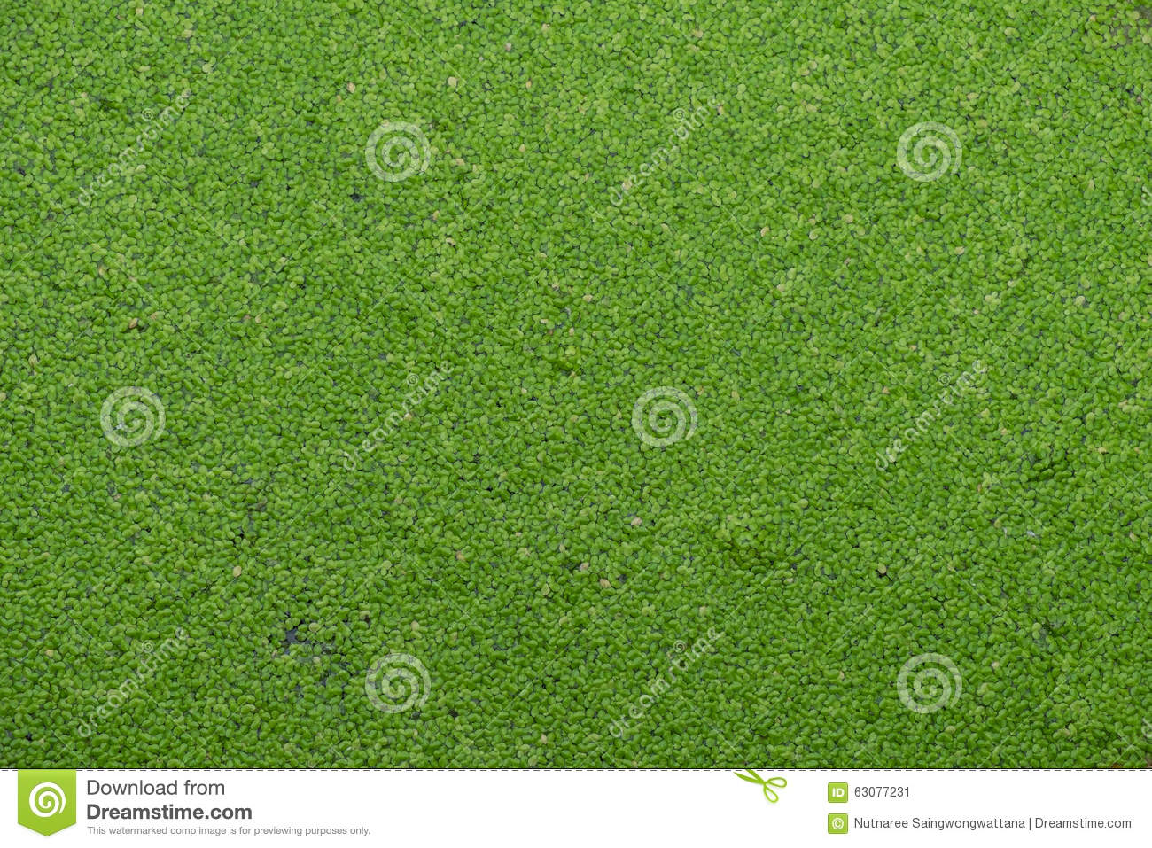 Download Texture de fougère d'eau image stock. Image du vert, home - 63077231