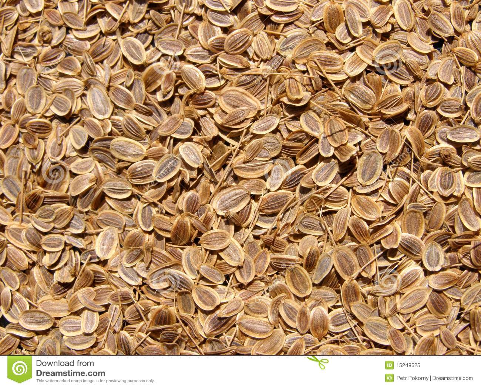 texture de graines d 39 aneth image stock image du fantastique 15248625. Black Bedroom Furniture Sets. Home Design Ideas