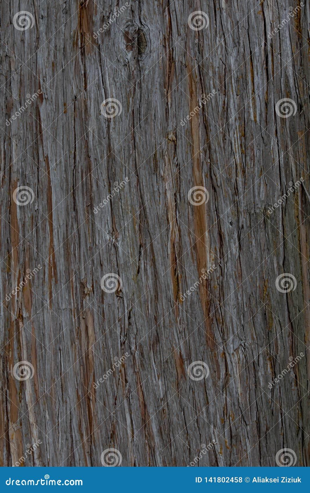 Texture de l écorce d un arbre