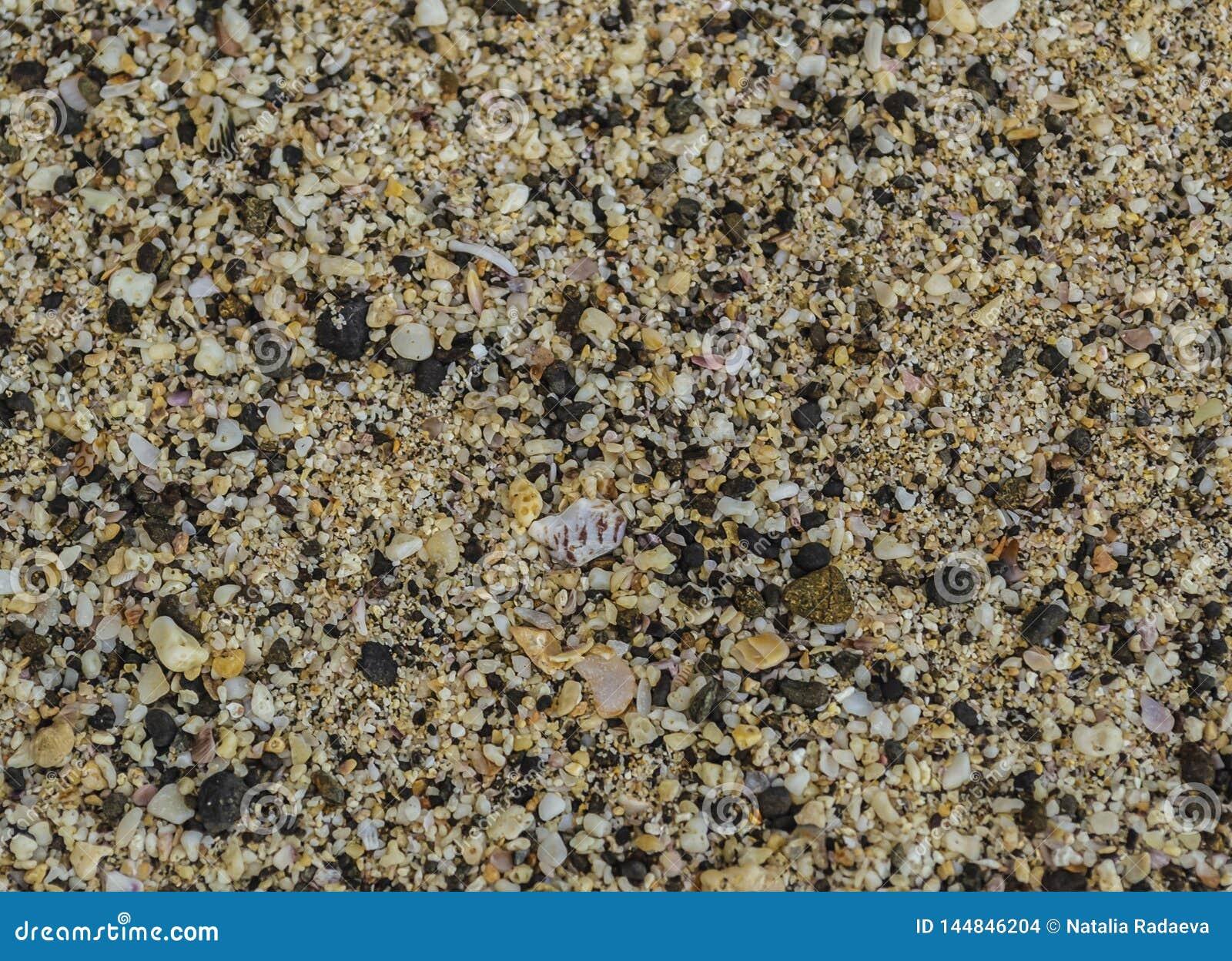 Texture de plage de sable avec les coquilles et le petit plan rapproché de cailloux