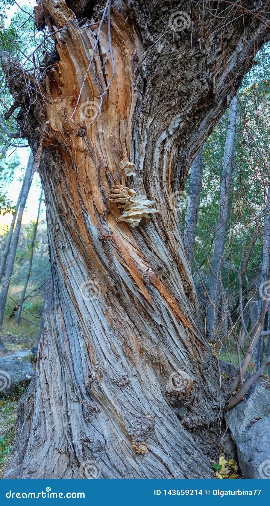 Texture de tronc d arbre dépouillé endommagé avec un bloc des champignons boisés closeup