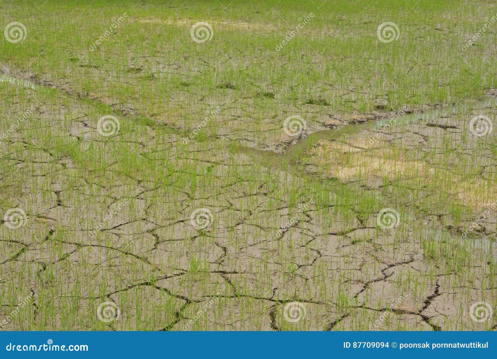 Texture des fissures dans la terre