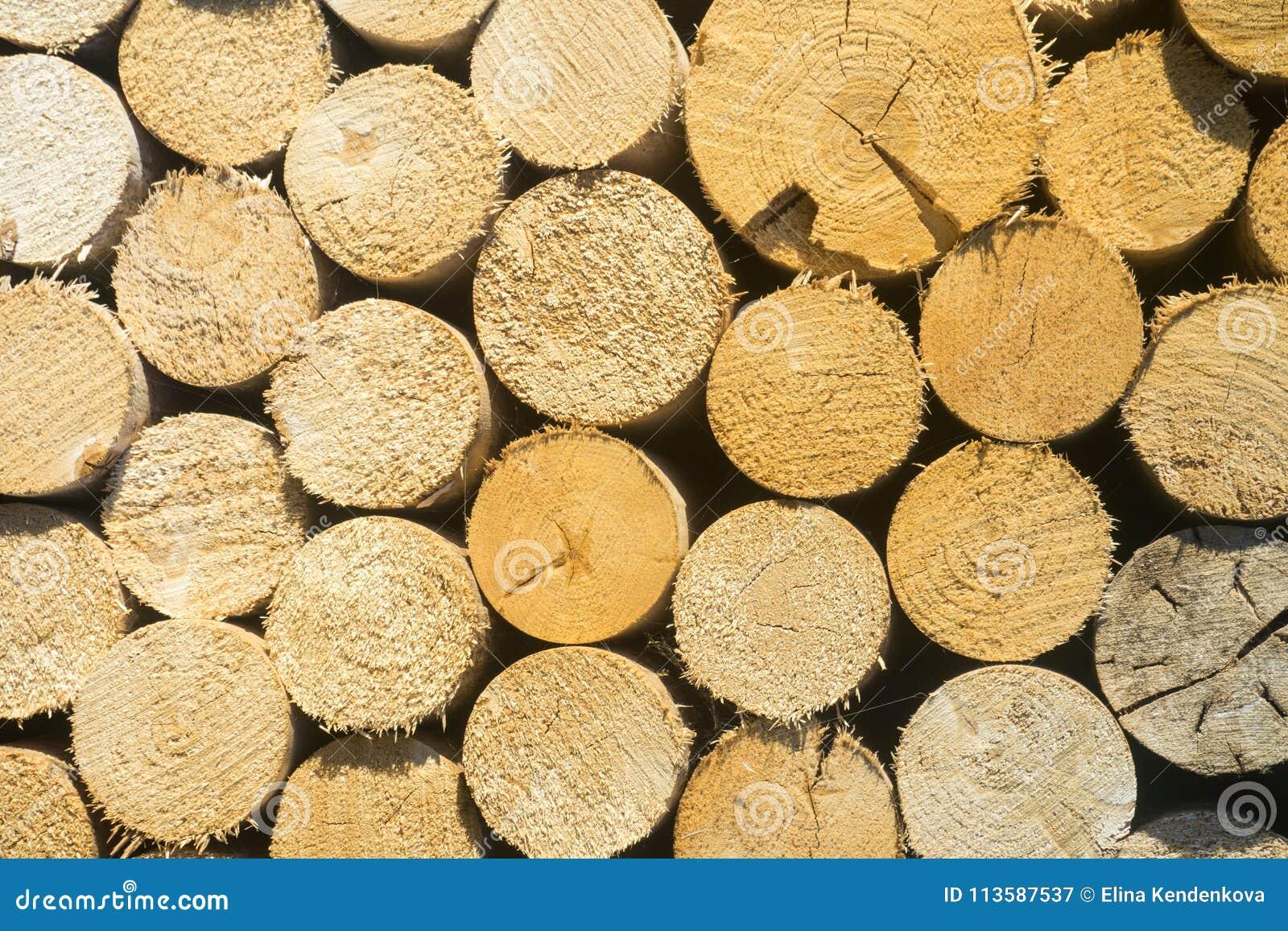 Texture Des Rondins En Bois Pour Des Conceptions Modèle Pour Des