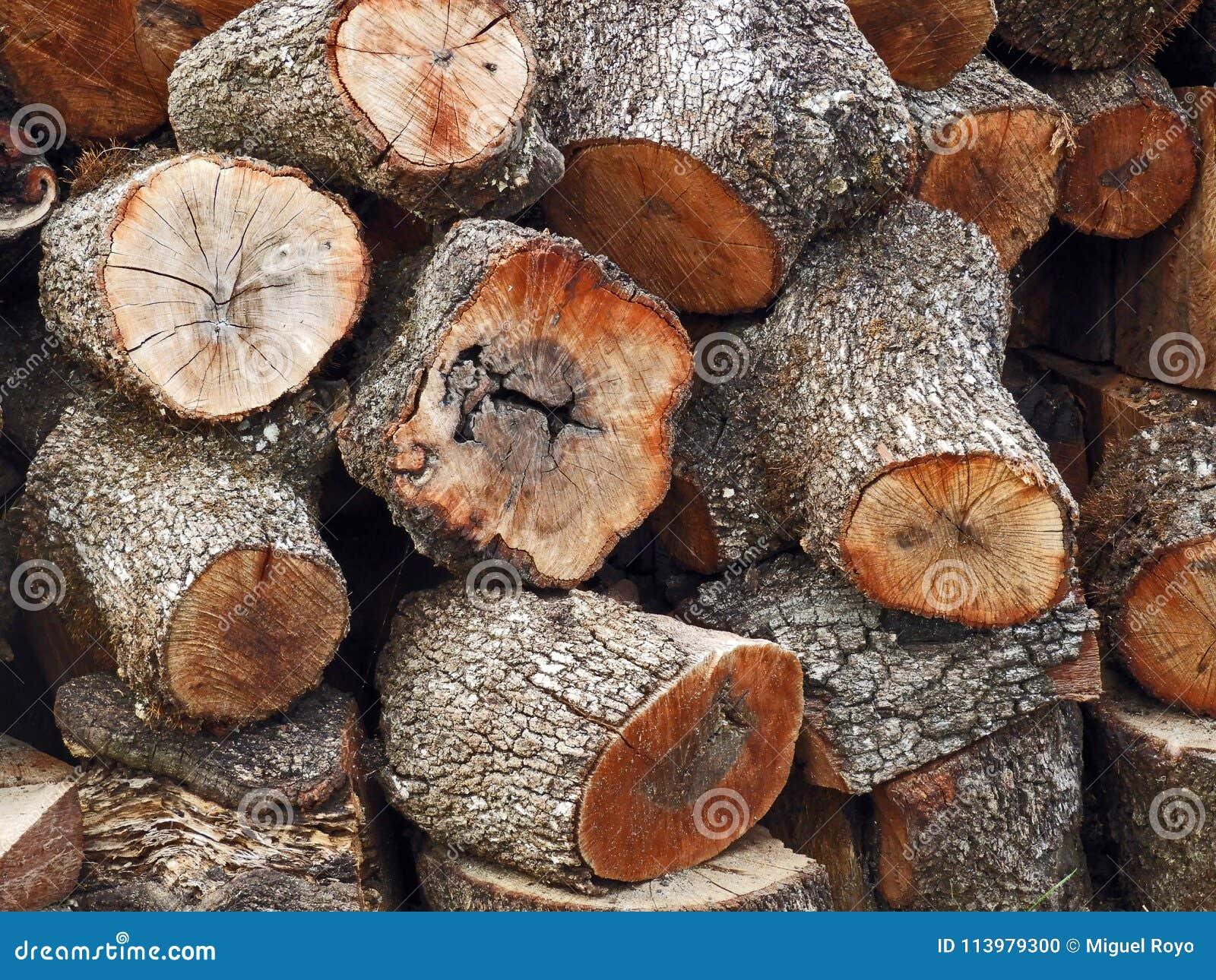 Texture des troncs d arbre