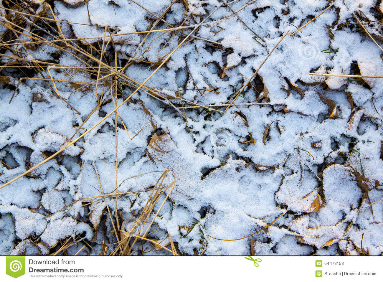 texture of dry leaves and grass under the fresh snow stock