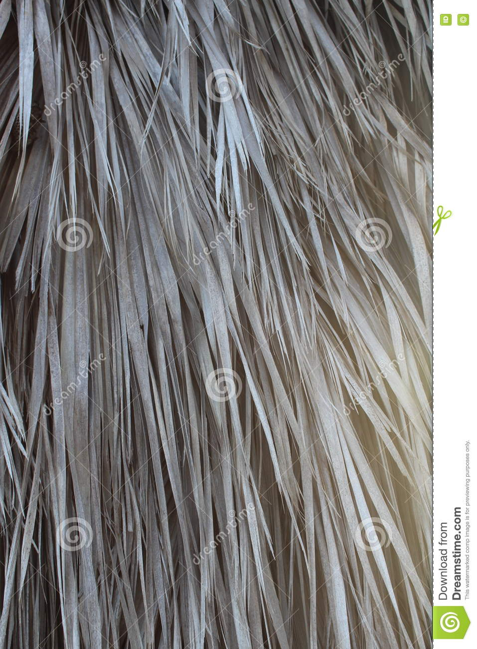 Dry Palm Leaves Texture Royalty Free Stock Photography