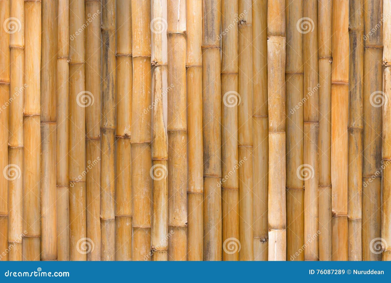 Texture en bambou, fond en bambou de barrière