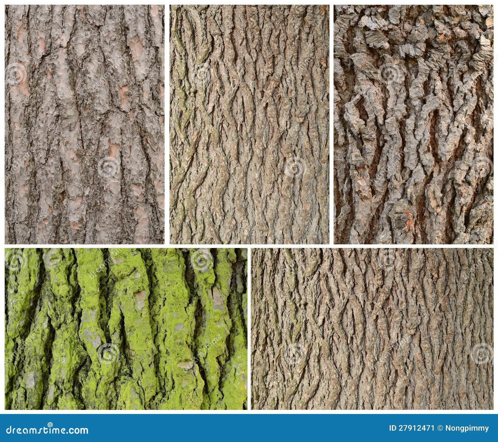 texture en bois d 39 corce image stock image 27912471. Black Bedroom Furniture Sets. Home Design Ideas